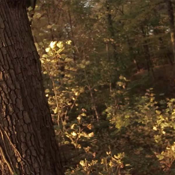 Through the Autumn