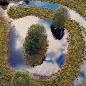 Luftaufnahmen eines Baums inmitten eines kleinen Sees